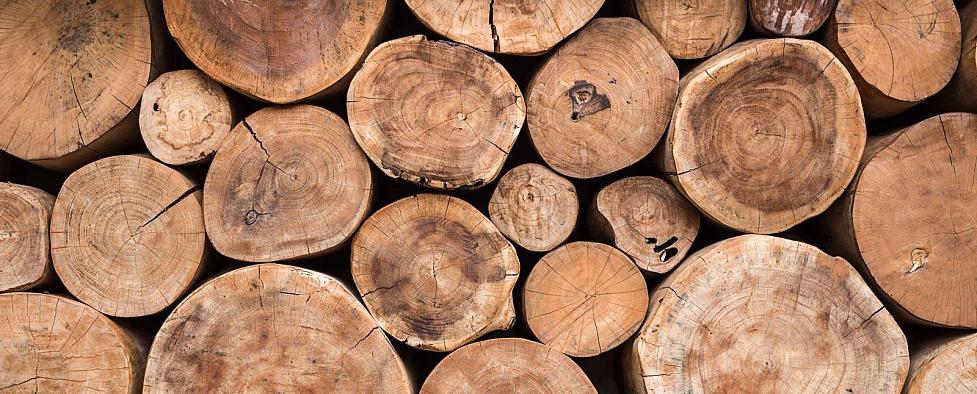 Лісові аукціони – як вигідно купити дуб-кругляк