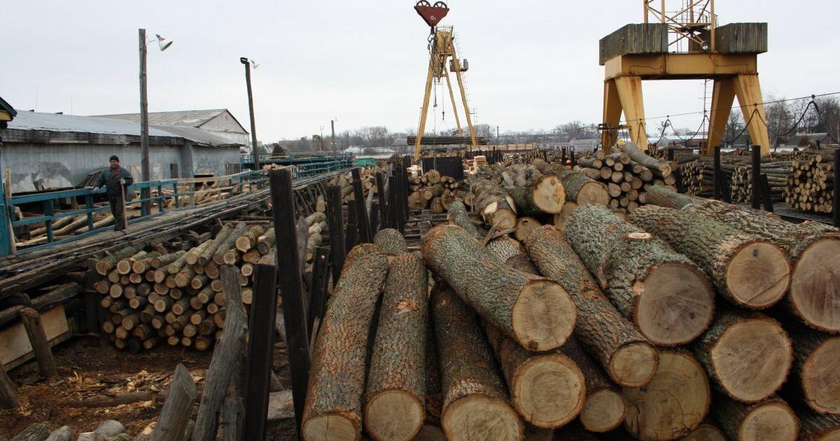 Як придбати деревину чи інше держмайно на Прозорро.Продажі
